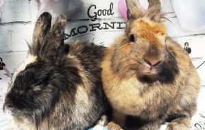 Nowe fakty w sprawie porzuconych królików