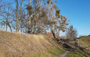 Wycinka drzew nieopodal bastionów