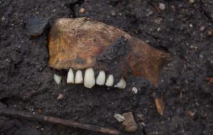 Ludzkie szczątki na budowie na Biskupiej Górce