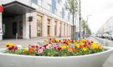 Tysiące kwiatów rozkwitną w Gdyni
