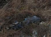 Porzucone zwłoki psów na Oruni