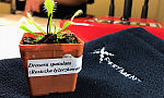 Jak wygląda erotyczne życie roślin? Nauka dla dorosłych w Experymencie