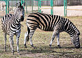 Zoo budzi się do życia
