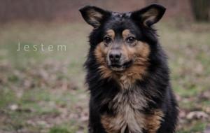 Adopcje zwierzaków: pies o cudnym imieniu szuka domu