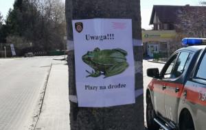 Uwaga, żaby na drogach