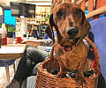 Dokąd na kawę i obiad w towarzystwie psa?
