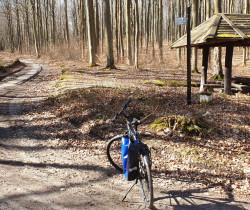 Weekendowa wycieczka rowerem po gdyńskich lasach