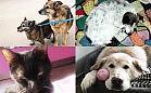 Nasz cykl pomógł tym zwierzakom - mają domy. Część 2