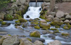Natura w mieście. Rzeki i potoki Trójmiasta