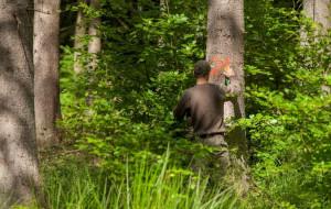 Leśniczy: Trójmiejskie lasy są bezpieczne