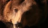 W wieku 43 lat zmarła Cytra, niedźwiedzica z gdańskiego zoo
