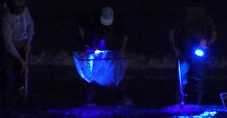 Żniwa bursztyniarzy na plaży w Jelitkowie