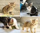 Kocięta z Opackiej szukają opiekunów