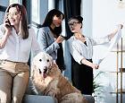 Z psem lub kotem do biura? Pracownicy są podzieleni