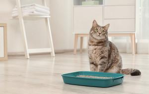 Czy koty są wredne i pamiętliwe?
