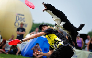 Latające psy w Kolibkach 3-4 sierpnia