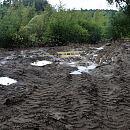 Zniszczona zieleń na Dąbrowie. Policja bada sprawę
