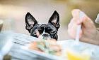 Nie karm zwierzaka resztkami ze stołu