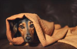 Pies i stres: pięć błędów, które popełniamy