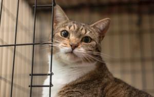Lunka: kocia indywidualistka szuka domu
