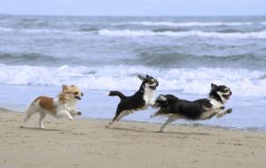 Od września wejdziesz z psem na plażę w Gdańsku
