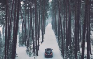 Volvo wypożyczyło choinki na święta, a teraz drzewka wrócą do lasów