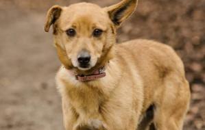 Adopcje zwierzaków: przestraszony Kubuś szuka opiekuna