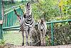 Nowe zwierzęta w gdańskim zoo