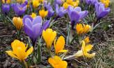 W sobotę wspólne sadzenie kwiatów w Gdańsku