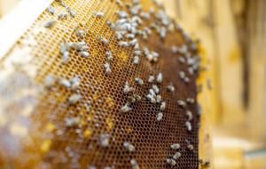 Naukowcy z PG tworzą system do nadzorowania pasieki pszczelarskiej