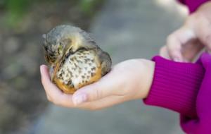 Ptaki kontra szyby. Jak pomóc im uniknąć kolizji?