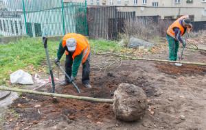 Posadzili ponad 150 nowych drzew w Gdańsku