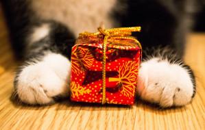 Bądź Mikołajem dla zwierząt: imprezy świąteczne