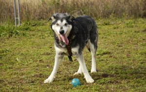 Agat: pies, który trafił na ulicę w Boże Narodzenie
