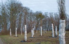 Gdynia: 100 dębów przetrwa budowę Trasy Kaszubskiej