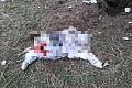 Zwłoki zwierzęcia bez głowy znaleziono w gdańskim parku