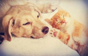 Jak pies z kotem: czy przyjaźń jest możliwa?