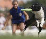 Aktywny weekend: psie frisbee, rowery, bieganie