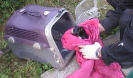 Gdyński Ekopatrol pomaga kotom. Historie ze szczęśliwym zakończeniem