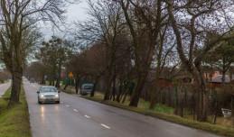 Nowe drzewa zamiast starych na ul. Zielonej w Gdyni