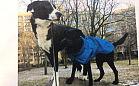 Dwa psy z Zaspy pilnie szukają nowego domu