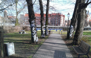 Pomazane pnie drzew w parku na Biskupiej Górce już oczyszczone