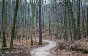 Będzie nowy szlak w Trójmiejskim Parku Krajobrazowym