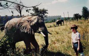 Słonie na Zaspie: niezwykła historia zdjęcia