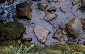 Fragmenty starych nagrobków w stawie w Oliwie