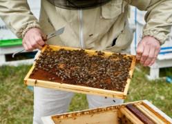 W Gdańsku każdy może zostać pszczelarzem