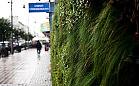 Zielone ściany w Gdyni