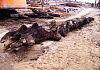 Na budowie odnaleziono pień drzewa sprzed pięciu tysięcy lat