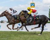Wyścigi konne Sopot 2017