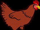 Wszędzie kury i kurczaki